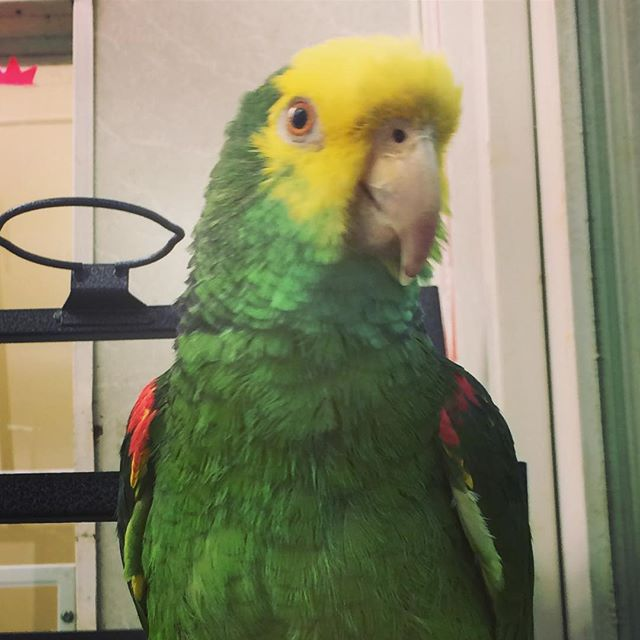 Our bird of the day is our store mascot