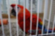 Our beautiful little jail bird. He is ju