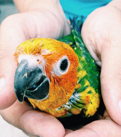 ITS CONURE MANIA!!!! Come in today to se