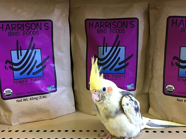 Harrison's Power Treats, back in stock!
