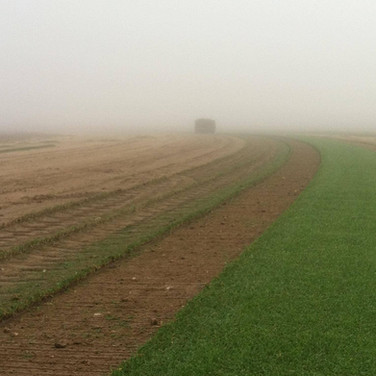 Foggy morning at the Wheatland sod farm