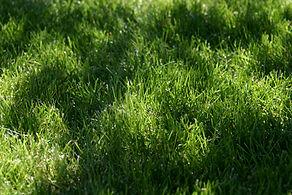 jorden ridnour - IMG_4243.JPG