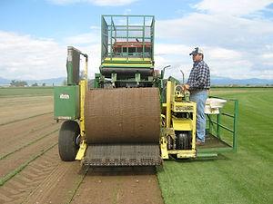 Harvesting Sod
