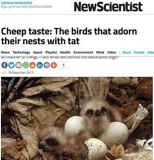 Screenshot_2019-07-10 Cheep taste The bi
