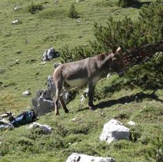 Randonnées et ânes sherpas