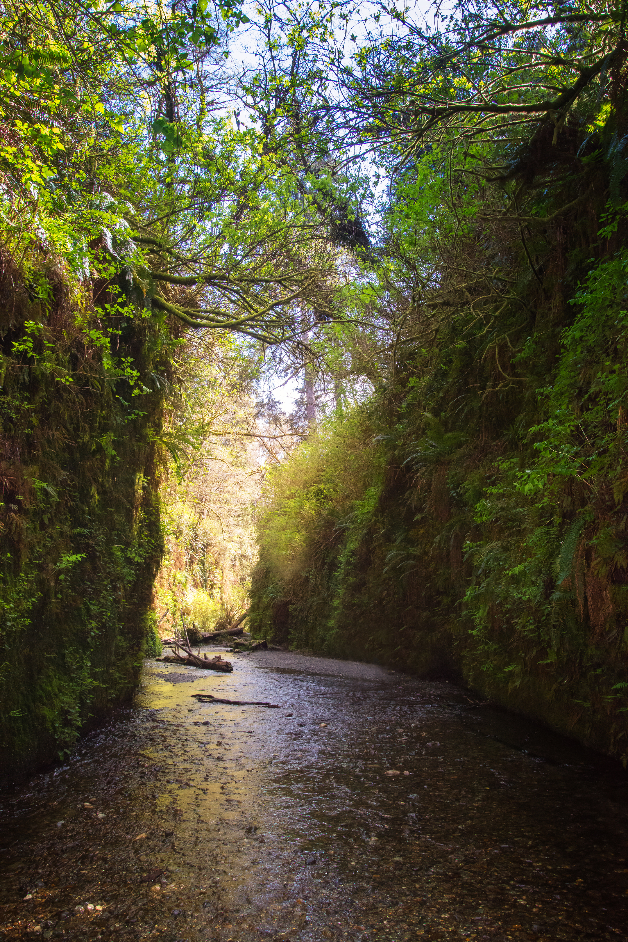 Spring in Fern Canyon