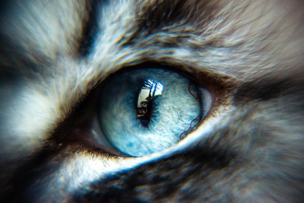 Yuki's Eye II.jpg