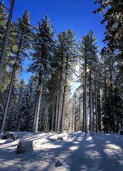 Spooner Lake Trail (Nevada)