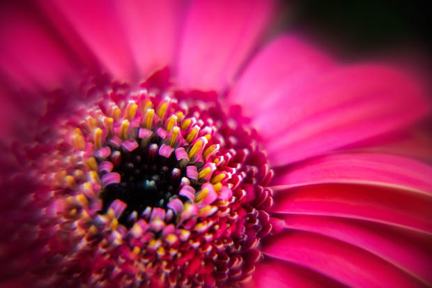 Daisy macro I.jpg
