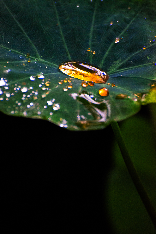 A liquid amber