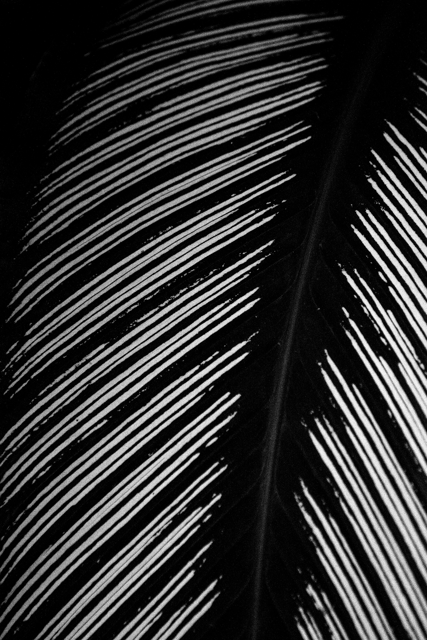 Abstract in Nature #30