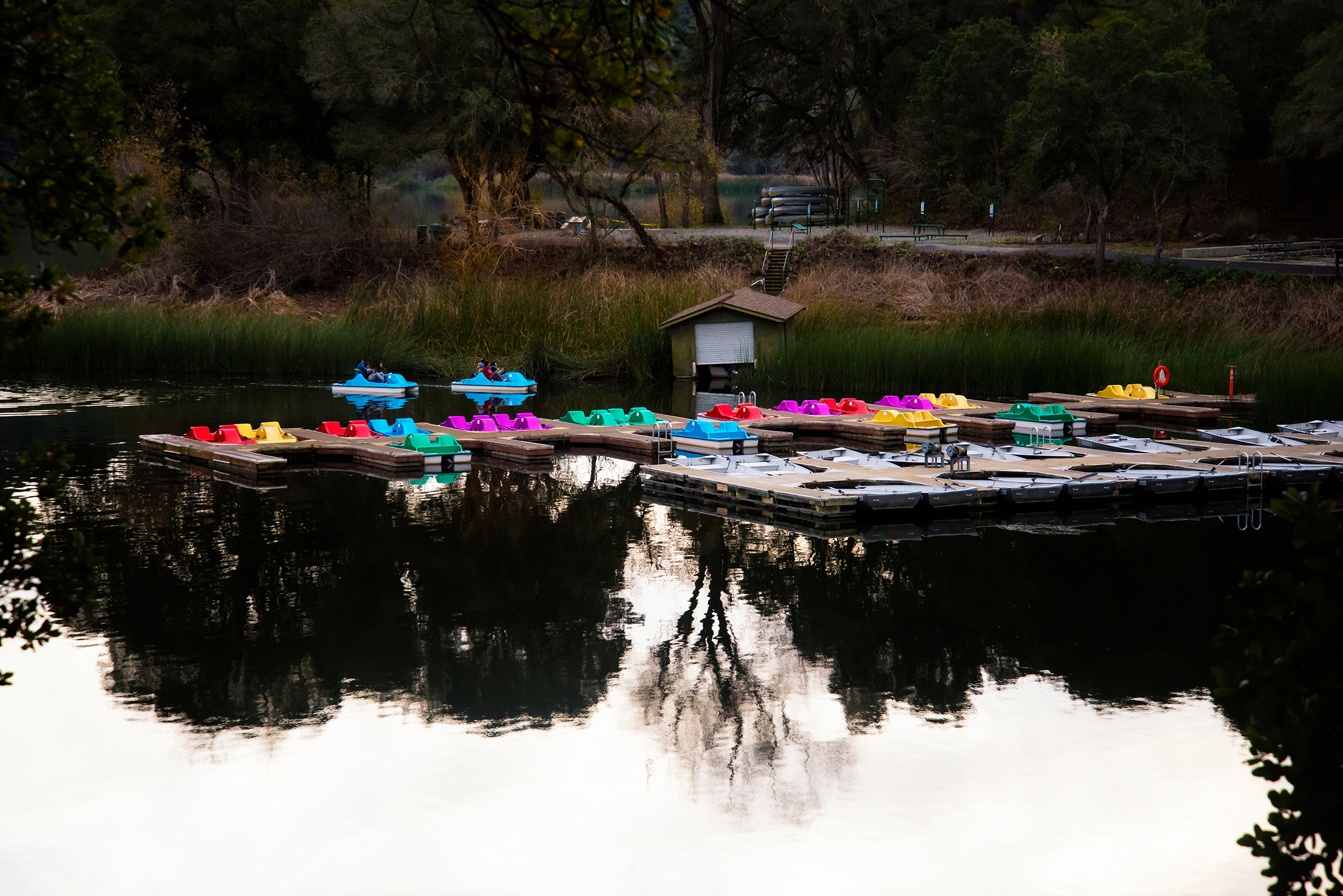Pedal boats at Lafayette Reservoir