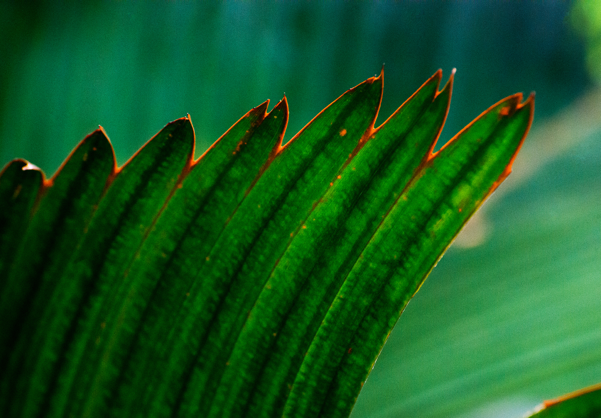 Abstract in Nature #59