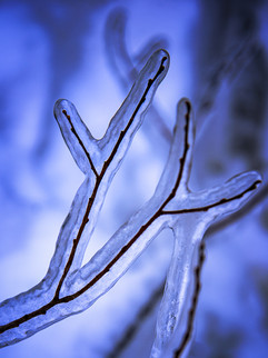 Wrapped in Ice.jpg