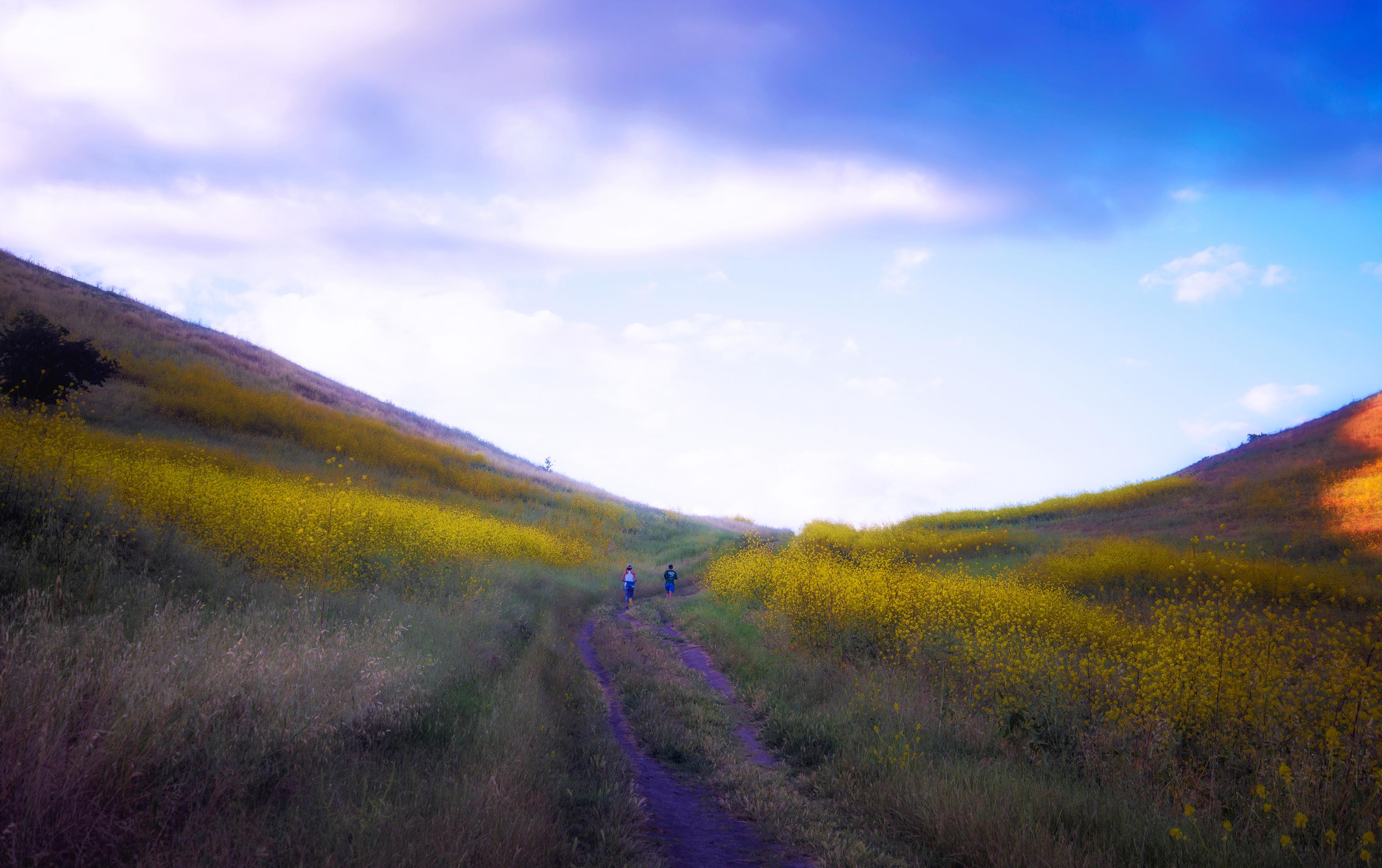 On a lovely jog--Shell Ridge