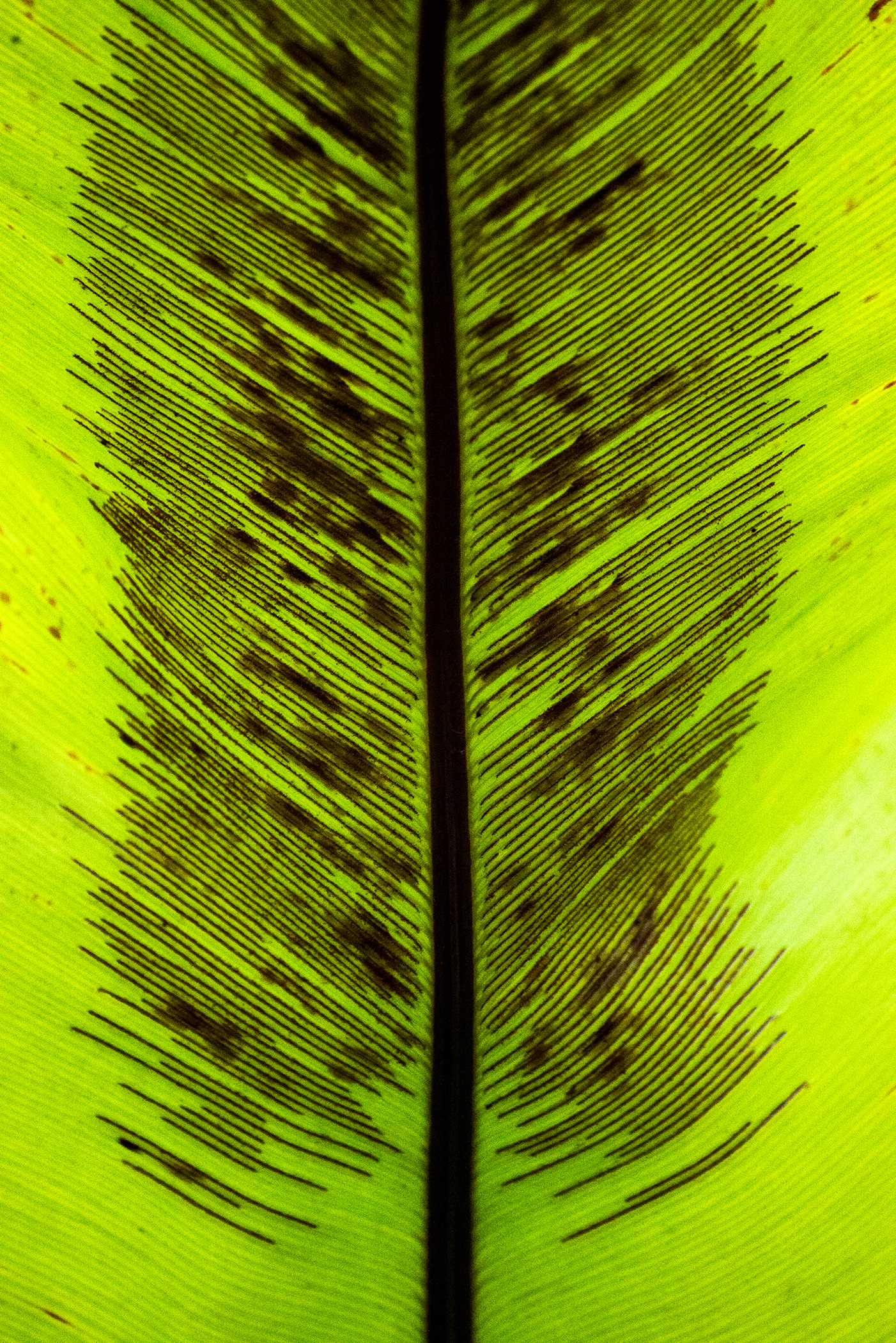 Abstract in Nature #53