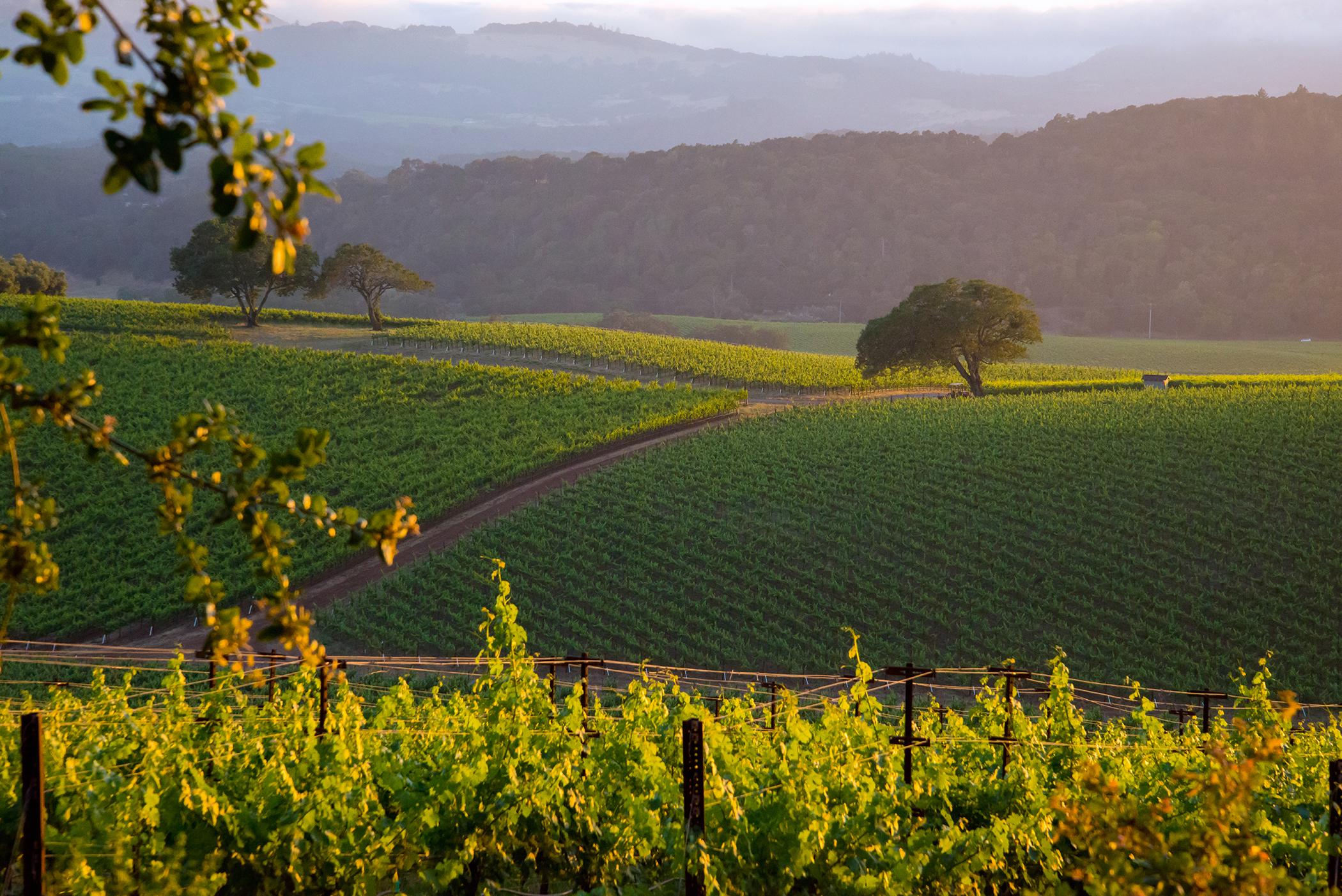 A Napa Valley Vineyard 2