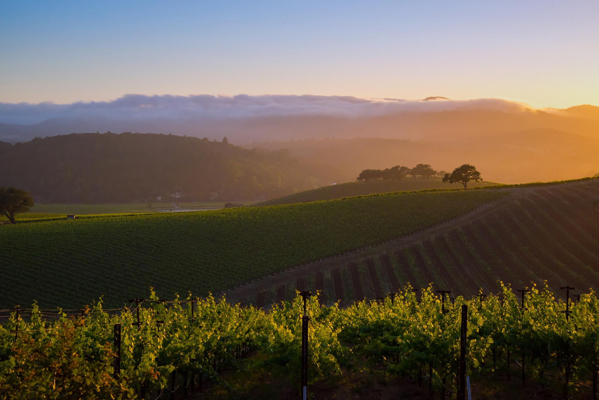 A Napa Valley Vineyard 3