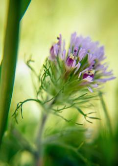 Spring Flower Macro-Owl's Brush-2.jpg