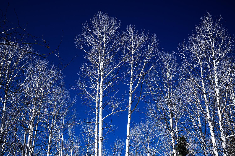 Bare White Branches