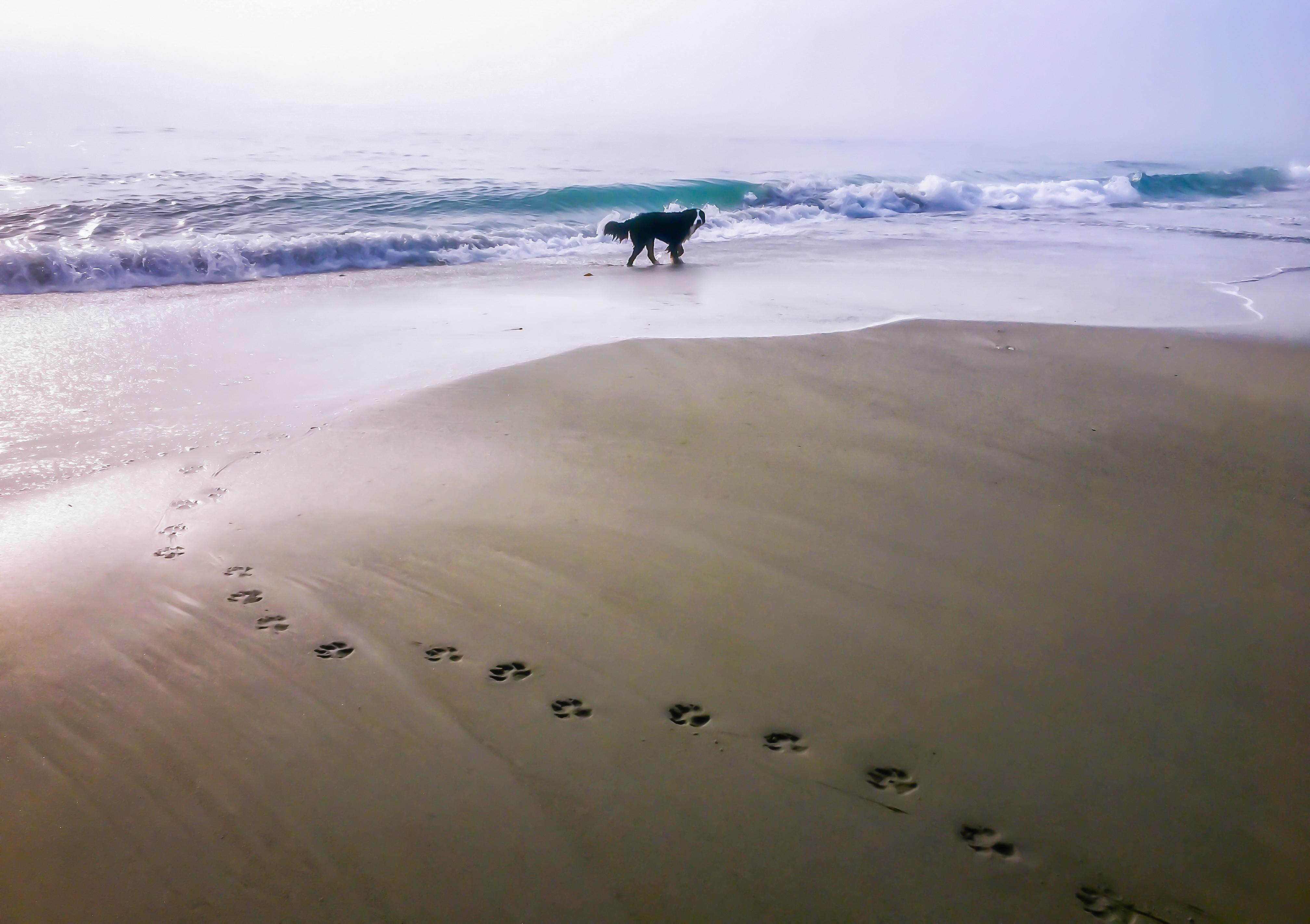Berner at the Beach
