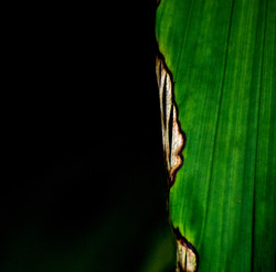 Abstract in Nature #42
