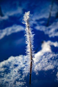 Dressed in Snowflakes.jpg