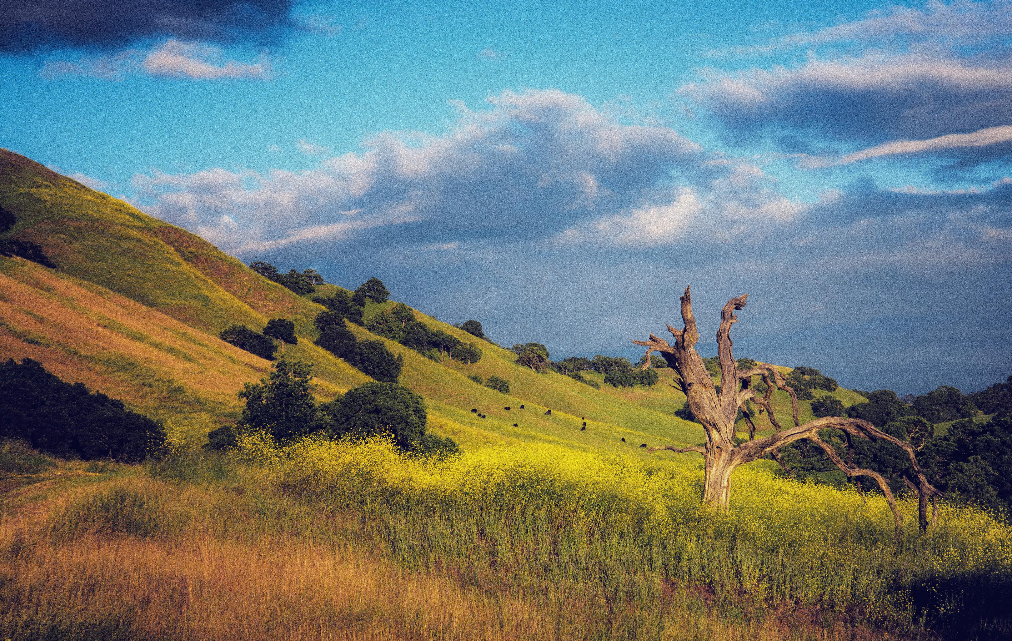 Pastoral Shell Ridge