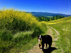 Hiking Shell Ridge