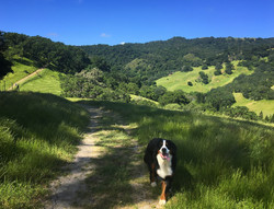 Finishing her hike at Briones