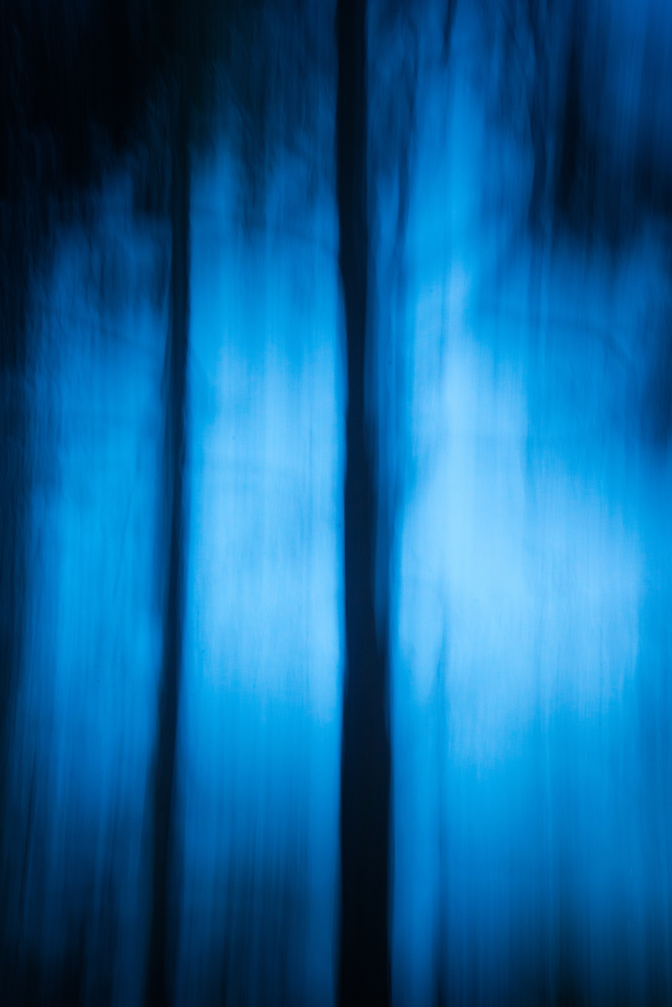 Through the Trees--abstract