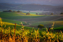 A Napa Valley Vineyard 4