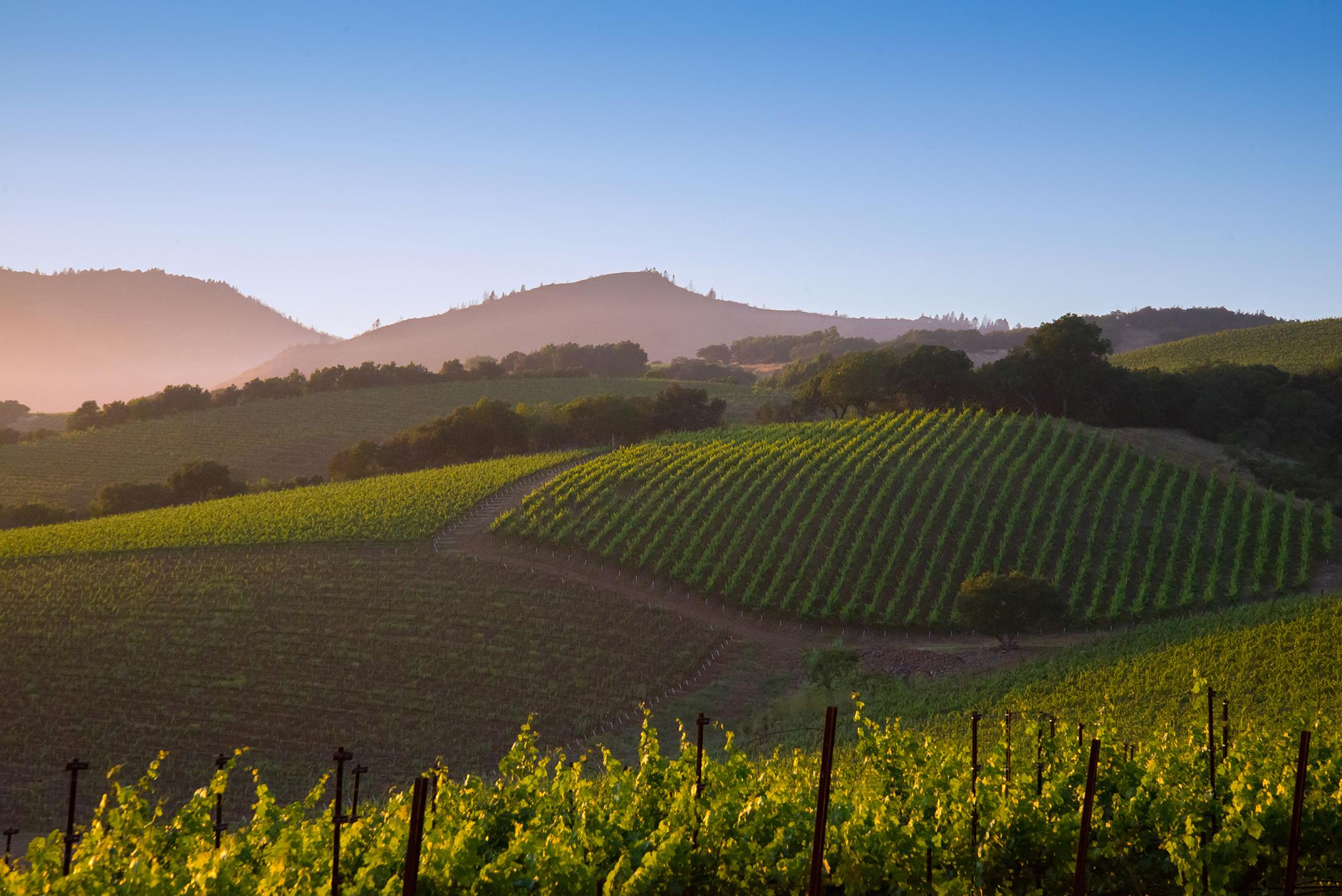 A Napa Valley Vineyard 5