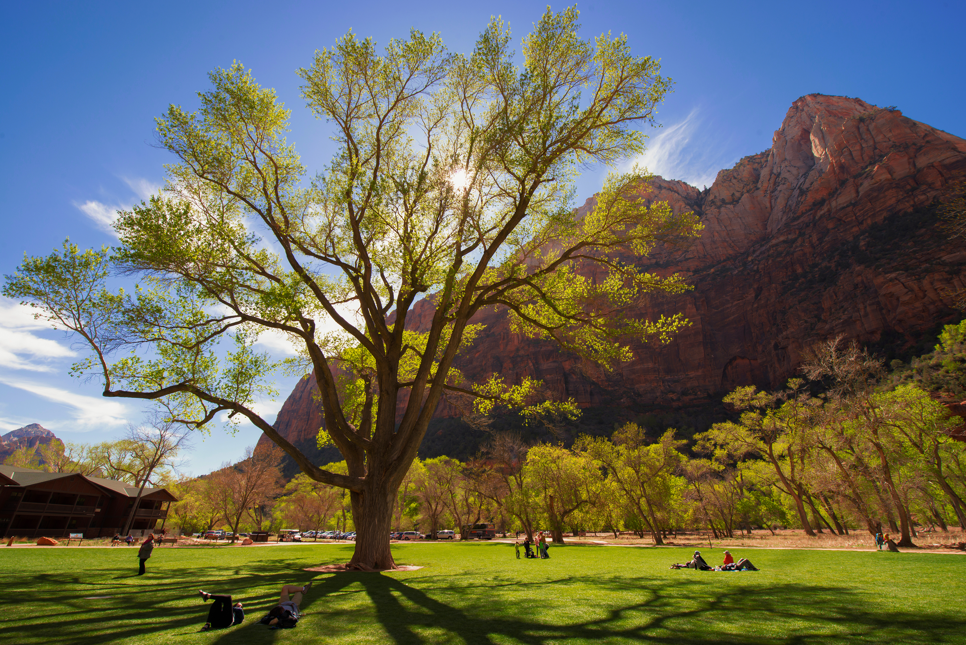 Zion's Beautiful Fremont Cottonwood