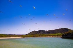 Birds in Flight at Carmel River