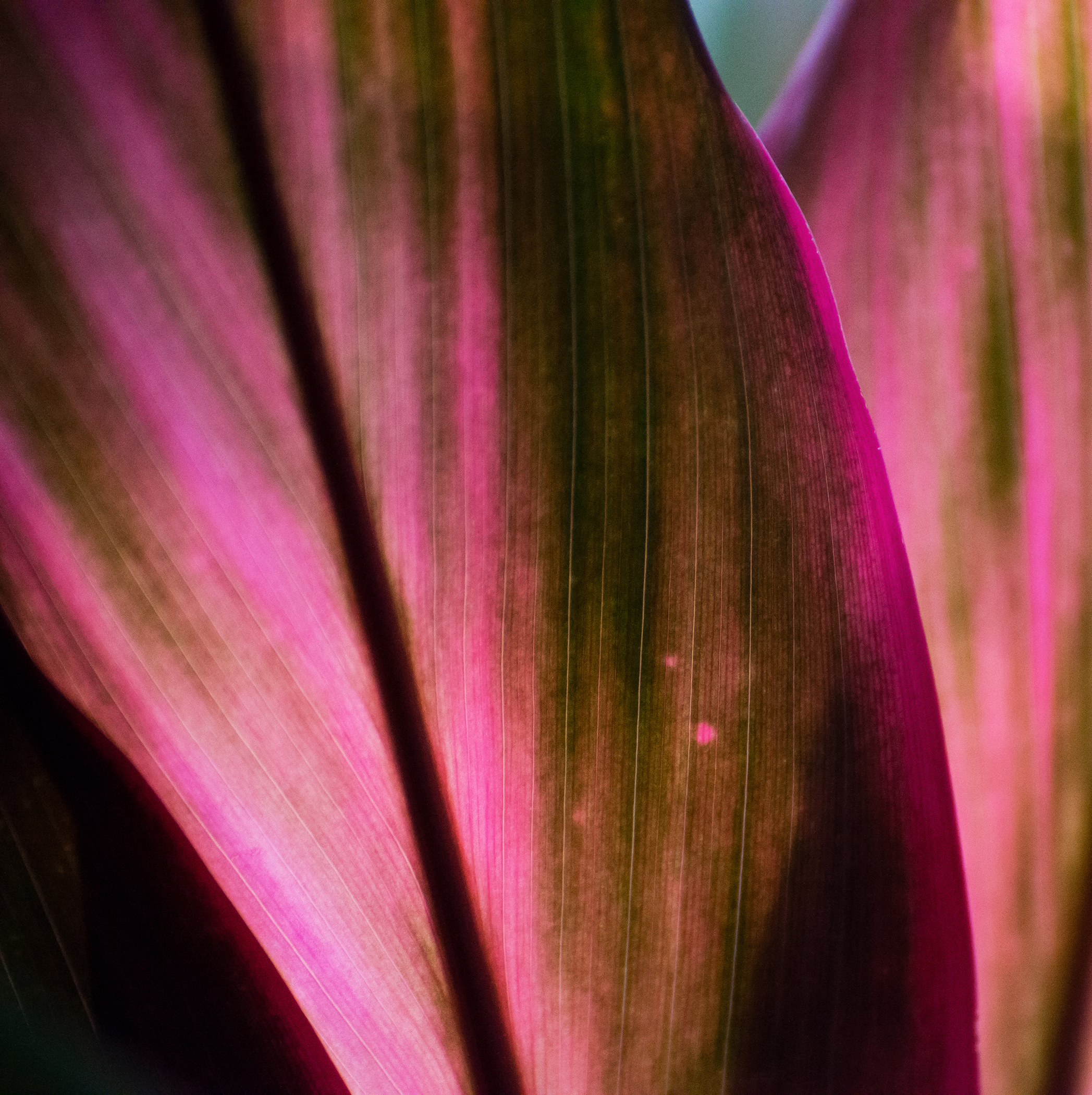 Abstract in Nature #41