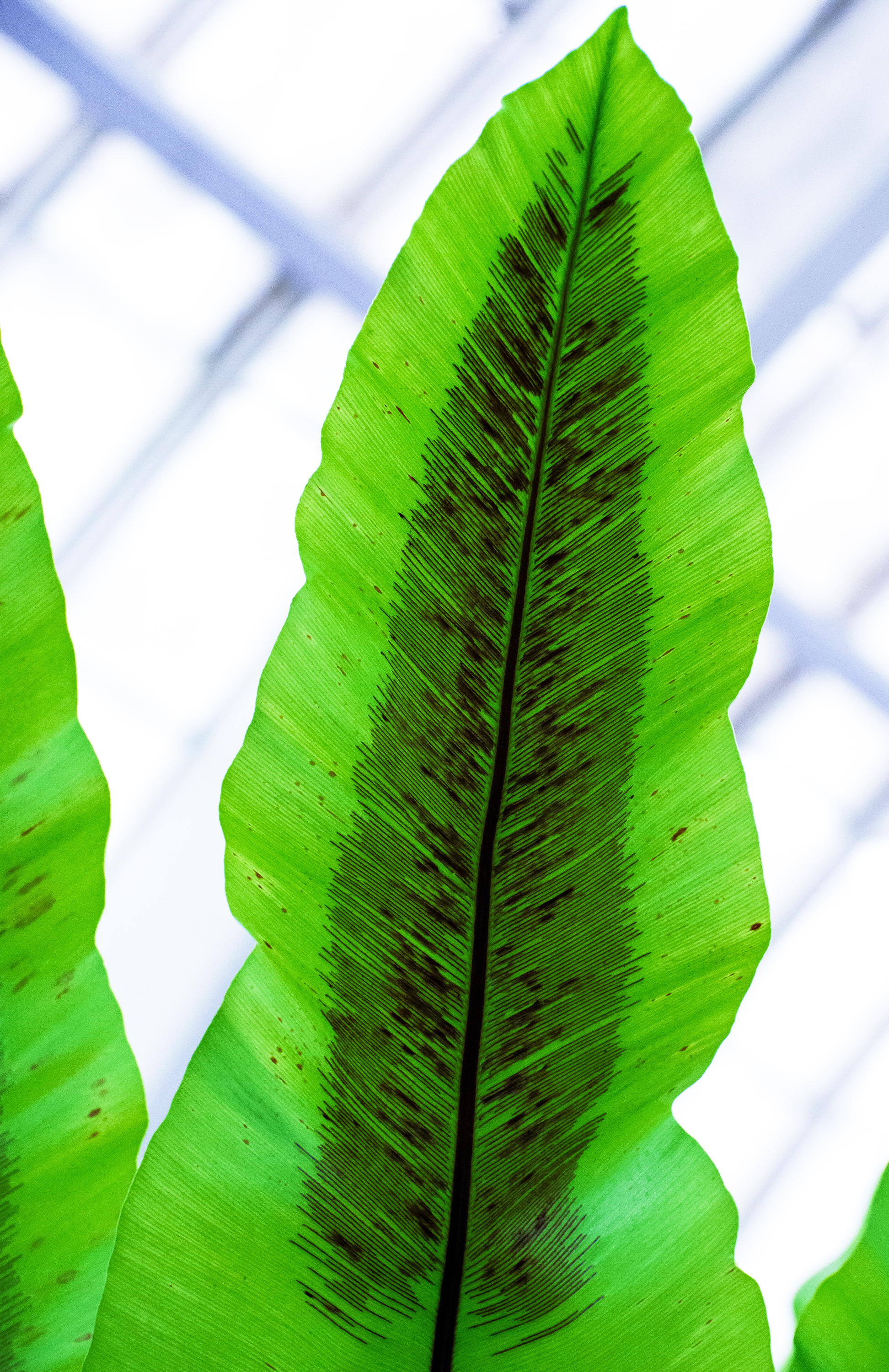Feather in a frond