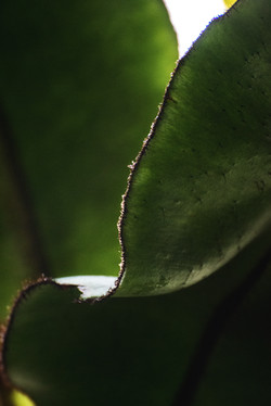 Abstract in Nature #52