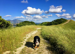 Trail Dog