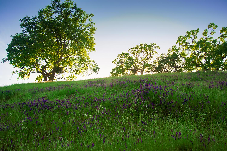Rising Oaks-Shell Ridge
