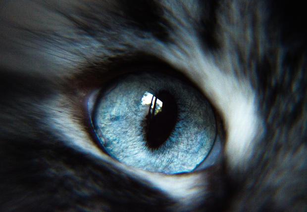 Yuki's Eye.jpg