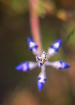 Spring Flower Macro-Lupine-7.jpg