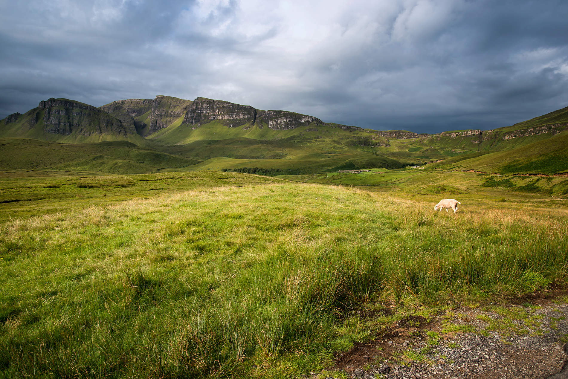 Sheep grazing on Trotternish Ridge