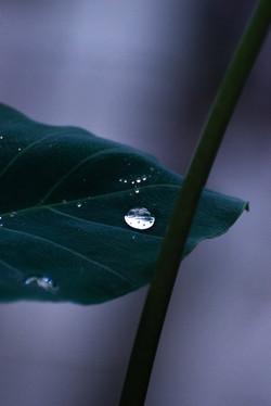Drop of Light