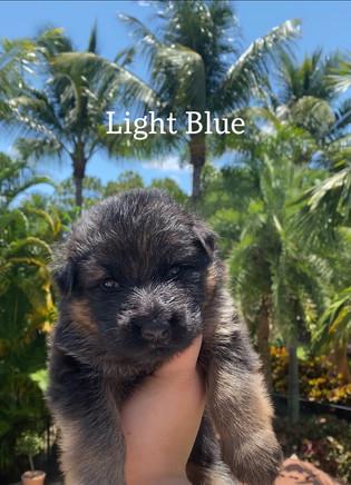 Light Blue.jpeg