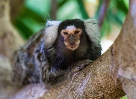 Zoo & Parcs | Parc Merveilleux, Luxemburg