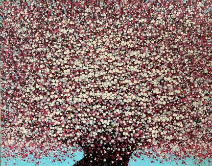 Cherry Blossoms | Hoa Đào