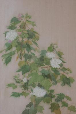 Hibiscus | Nhành Phù Dung Hoa Nở