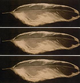 Feather | Lông Vũ