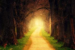 tree-3094982_1920.jpg